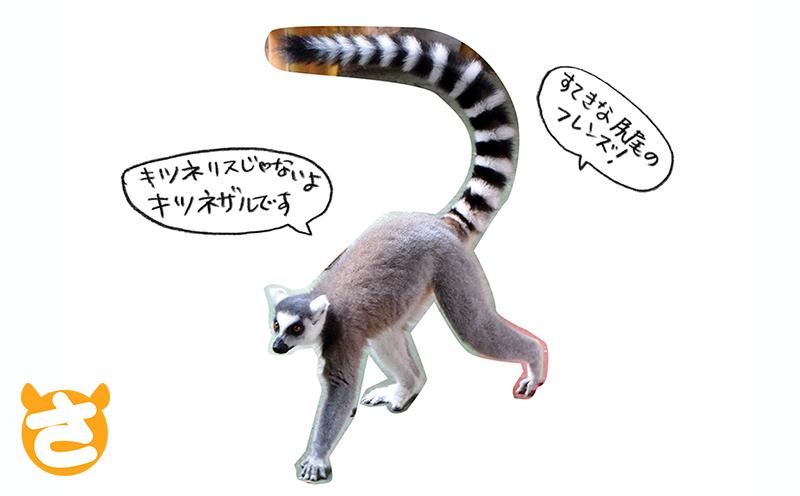 kemono_DSCF6401