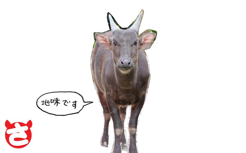 kemono_DSCF7068