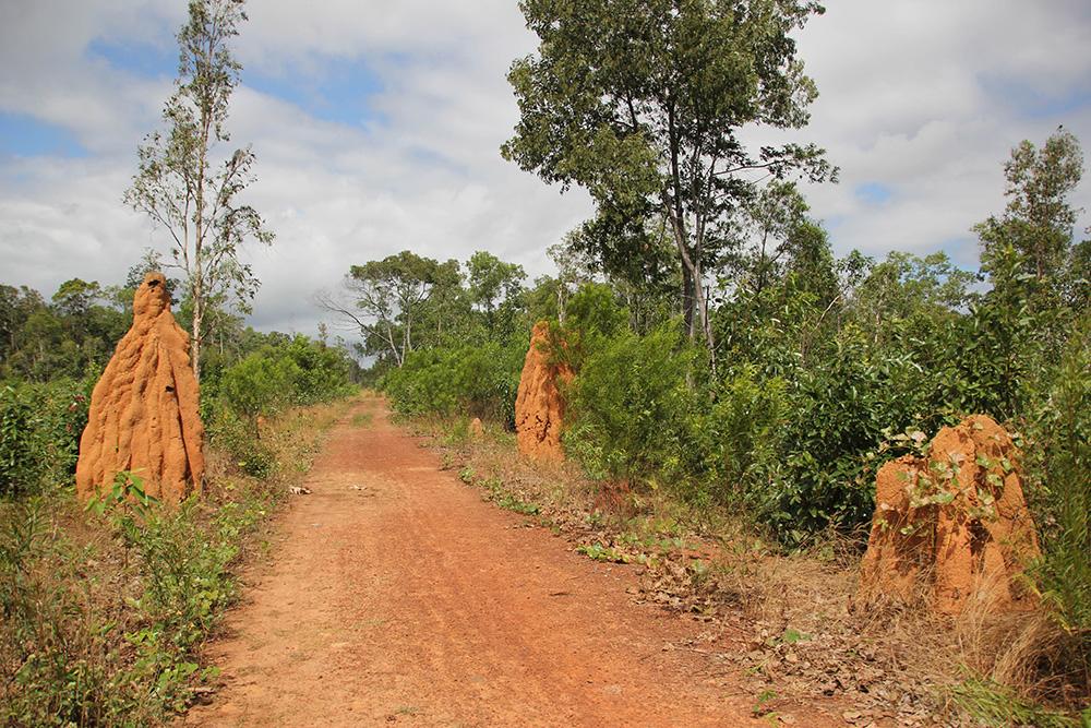 nabeyama_papua_ワスル国立公園の蟻塚4