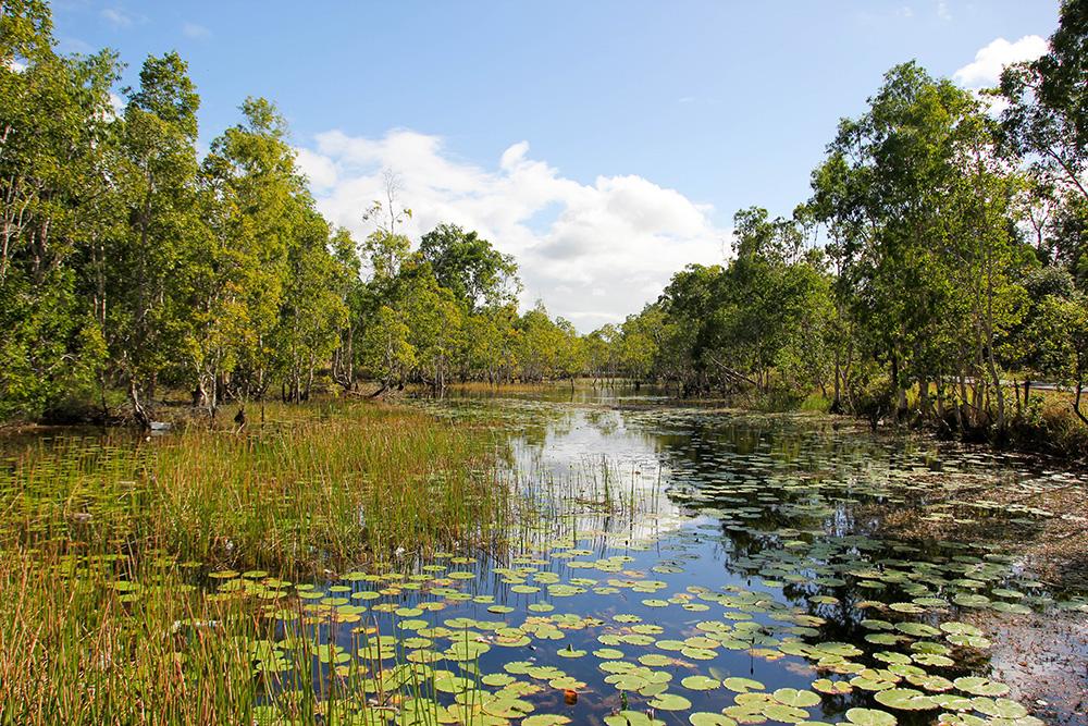 nabeyama_papua_ワスル国立公園内の池。地元民のフ?ール代わり