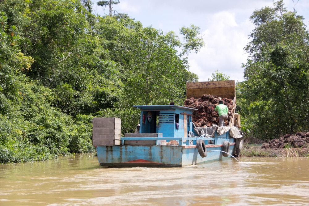北カリマンタン、アブラヤシの実を収穫して船で運ぶ